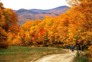 Fall Foliage Celebration
