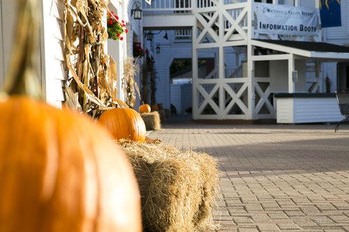 Pumpkins at WV