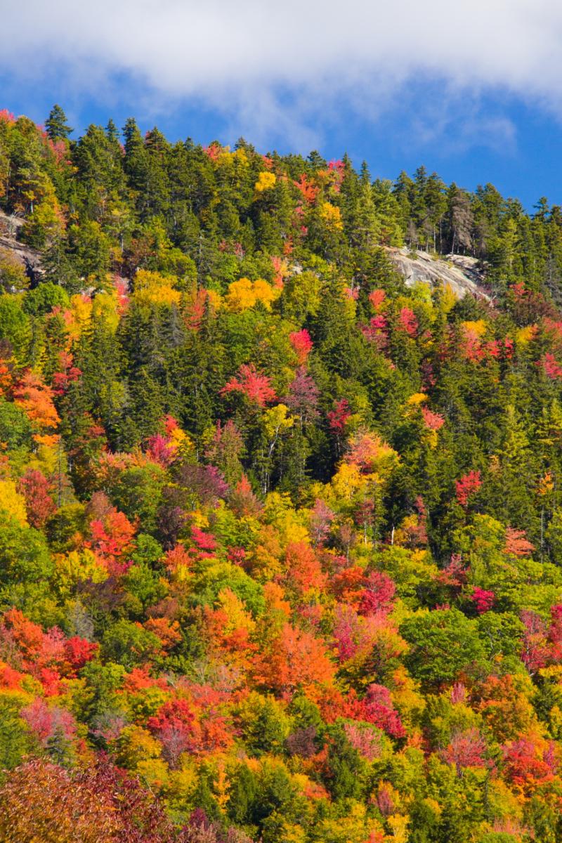 New-england-foliage-1478280636VWj
