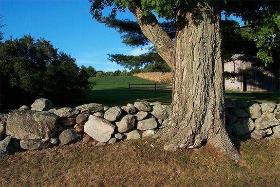 Tree-landowner